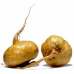 Maca Root – Super food for a Super Tonic